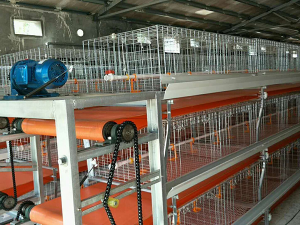 Automatic chicken cage equipment